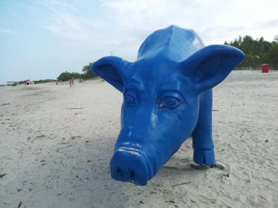Zilais cerību sivēns